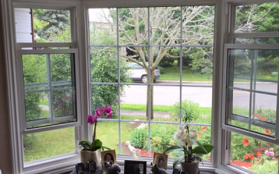 Key Reasons to Replace Your Windows