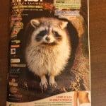 raccoon nest