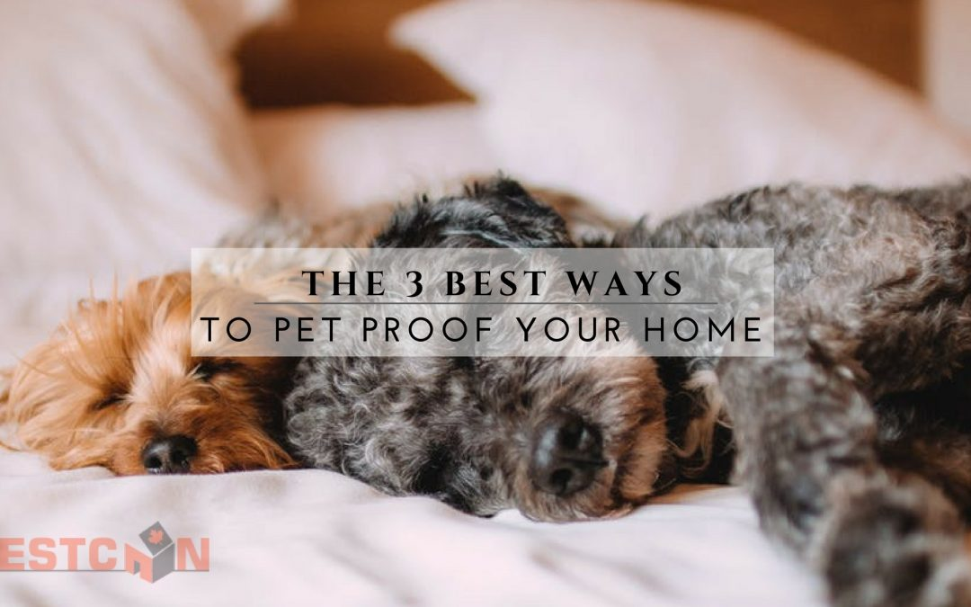 The 3 Best Ways to Pet Proof Your Home