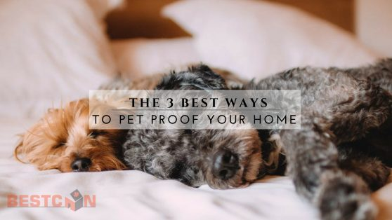 The 3 Best Ways to Pet Proof Your Home - BestCan