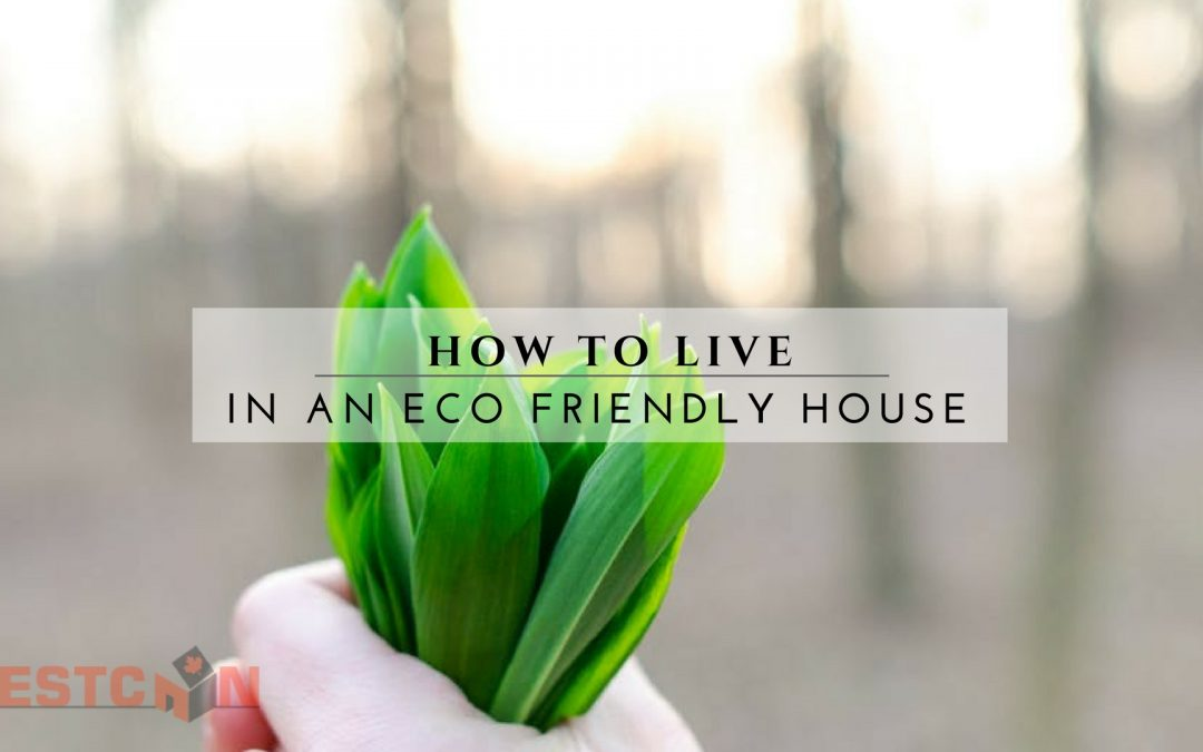 How to Live In An Eco Friendly House